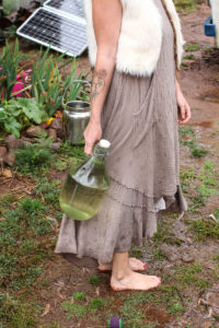 Hollie B.: Our water collection bottle, is heavy enough to be a small load, yet light enough for the children to contribute as well. Sometimes water collection will happen with the milk jugs (in background), and I am constantly carrying water around the garden to hand water baby plants.